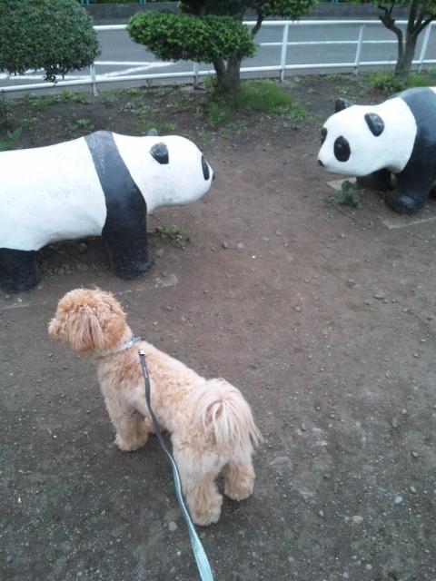 ノエル、初めてパンダに会う