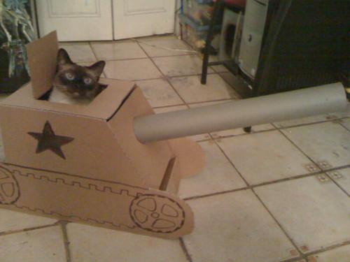 Danball_cat