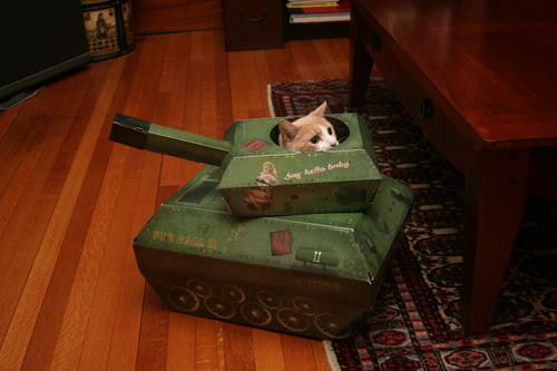 Danball_cat2
