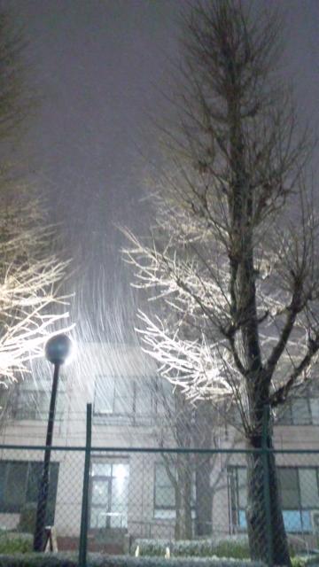 昨夜は雪が降りました