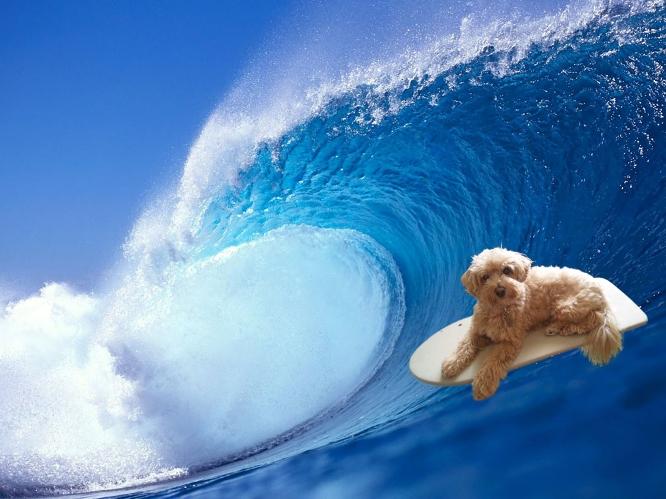 Surf_noel2012_2